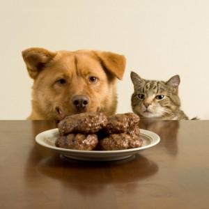 Hond en kat met bord vlees